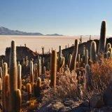 Bolivia-isla-incahuasi-cactus-giganti