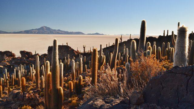 salar-de-uyuni-bolivia-isla-incahuasi-cactus-giganti