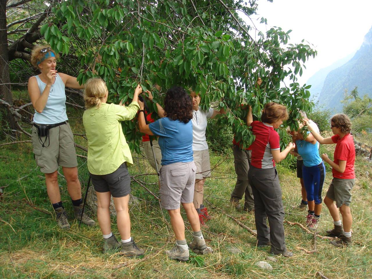 ciliege-trekking-valli-valdesi