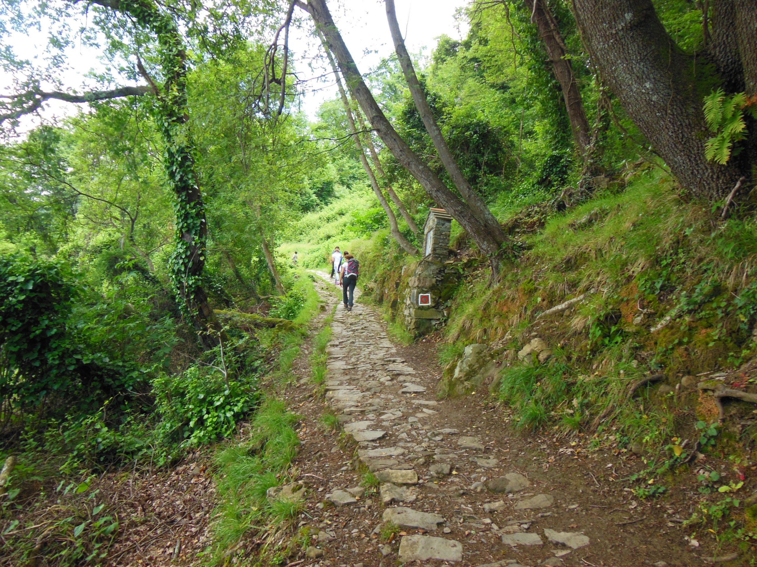 https://www.trekkilandia.it/wp-content/uploads/2020/06/escursione-Portofino-039-scaled.jpg