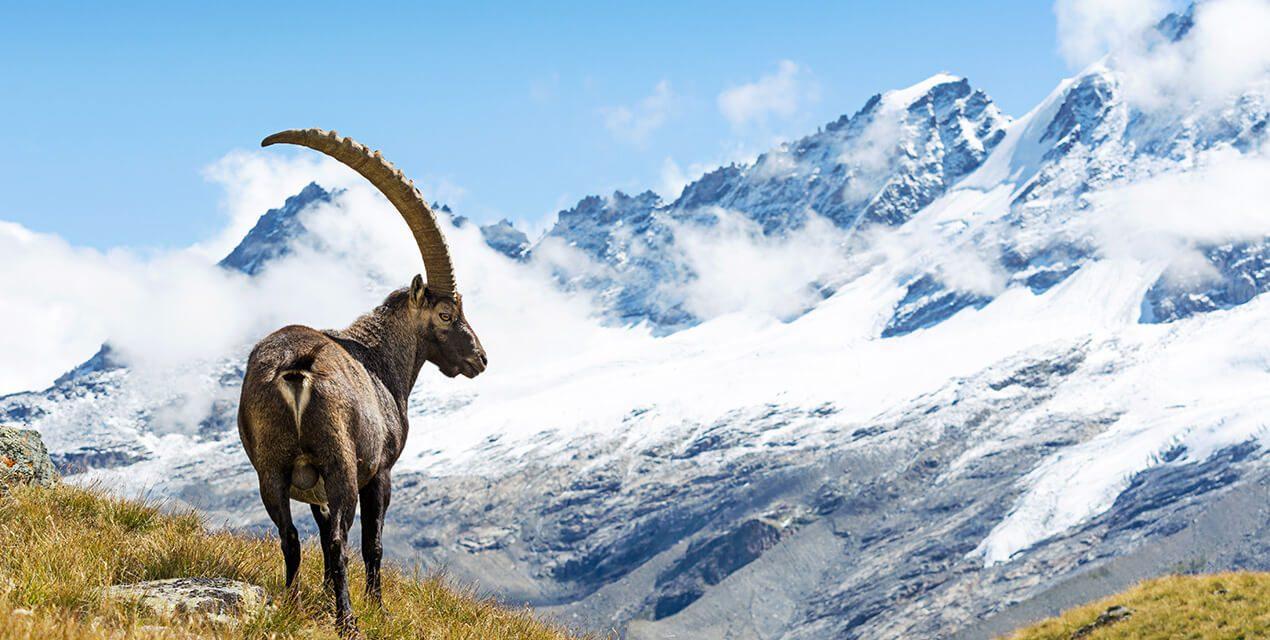 https://www.trekkilandia.it/wp-content/uploads/2020/10/Trekking-Gran-paradiso-1270x640.jpg