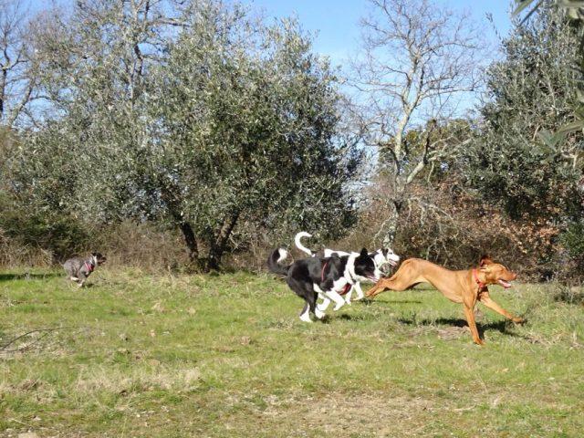 passeggiata-dog-trekking-in-toscana