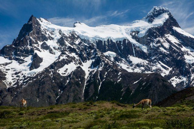 conservazione-fauna-patagonia-cilena