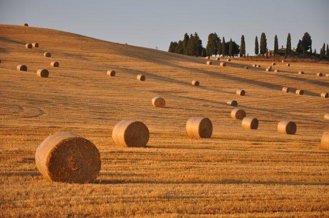colline-toscana-itinerari-fotografici-val-dorcia